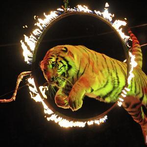 Цирки Невьянска