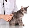 Ветеринарные клиники в Невьянске